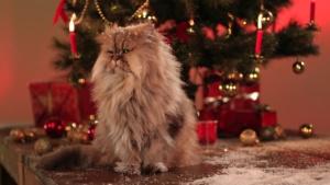 Kocourova vánoční koleda – GE Money